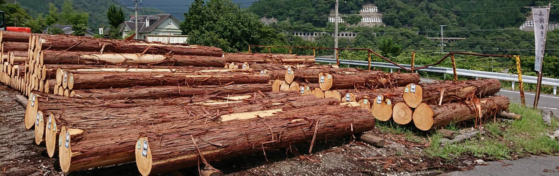 高齢級・国有林材木曽ひのき