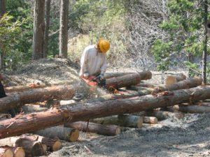 集材された木材は、利用する長さに切られトラックで、市場などの販売先へ運ばれます。
