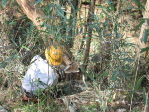 80年から100年かけて成長した檜は、収穫の時期を迎えます。